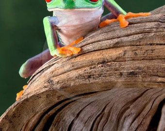 Two Frogs on a Log, Mother & Baby Frog Art