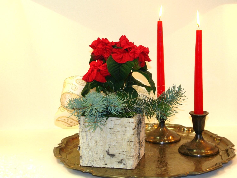 Birch bark vases boxes christmas decorations ideas poinsettia