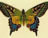 Beautiful Butterfly Digital Image