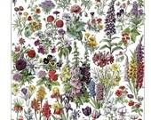 antique french botanical illustration garden flowers digital download