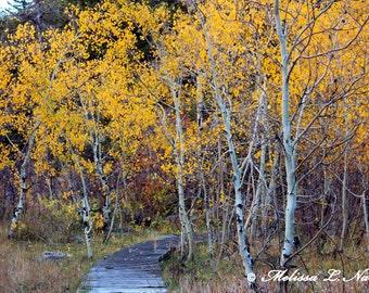 Aspen Trail Wyoming Fine Art Print