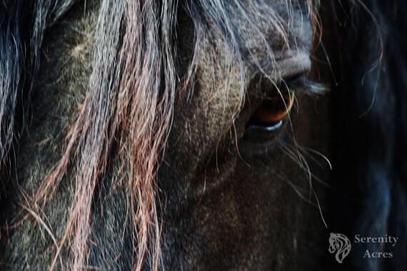 Black horse face close up - photo#8
