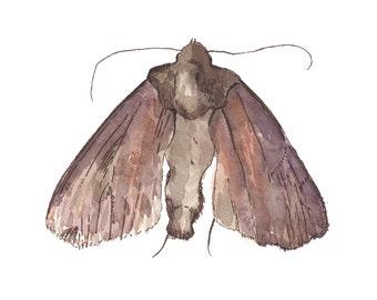 Moth (8x10)