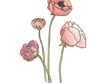 Poppies (8x10)
