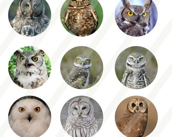 Owl digital collage sheet 4x6 1 inch round for bottle cap INSTANT DOWNLOAD
