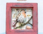 Robin Redbreast, Bird Picture, 3D Bird model, Red Box Frame, Garden Bird, Paper Mache Bird, Bird Eggs, China Mosaic.