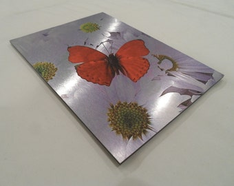Metal Print, Butterfly on Daisies, 5x7, White Daisy