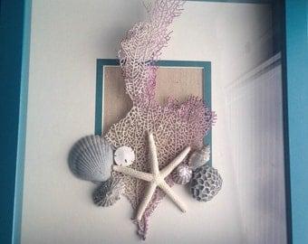 Sealife Shadow Box Art Fan Coral And Shell Display