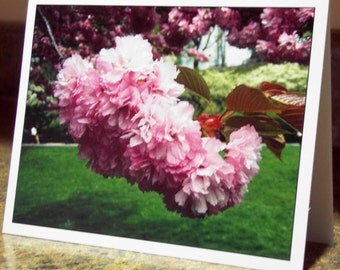 Blank Greeting Card - Cherry Blossom