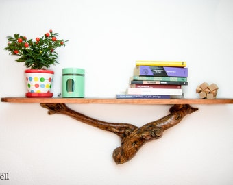 Bookcase in olive tree trunk