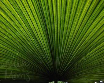 Bright Green Leaf photograph print 10x8