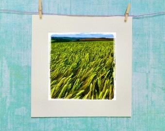 June Barley
