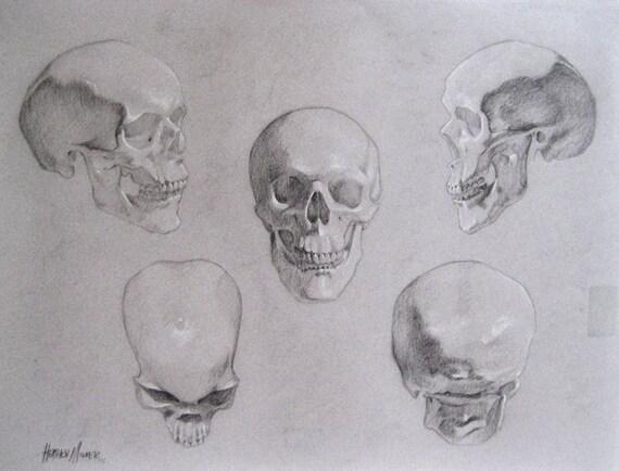 Original Charcoal Drawing: Skull Study