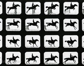 "Eadweard Muybridge Photo, Jumping Horse, 1880s, 11x17"""