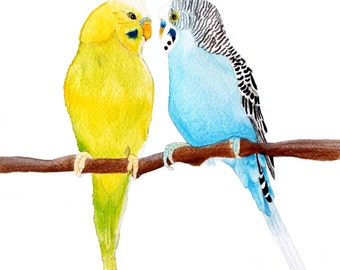 Two Budgies Print