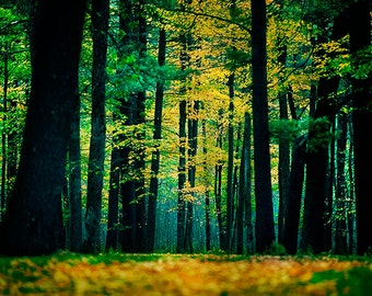 Fairytale Decor, Landscape Photography, Wisconsin Wall Art, Nature Photo, Enchanted Forest, Green, Blue and Yellow, Woods, Autumn Prints