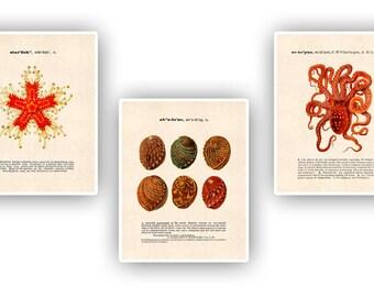 3 Nautical Prints,  Abalone art, starfish art, Nautical art, octopus art, dictionary definitions, educational poster, natural history decor