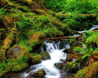 Lush Waterfall / Hoh RainForest/ Olympic National Park  / Landscape Photography