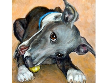 Italian Greyhound Art Original Acrylic Painting, 11x14  Iggy with Tennis Ball, Sight Hounds, Grey hound