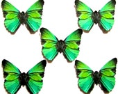 24 Topical Green & Black  Butterflies for DIY weddings, DIY baby showers,  butterfly school kit, butterfly wall décor, stocking stuffers