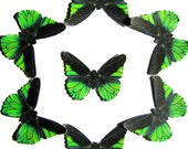 24 Electric Green & Black Butterflies for DIY weddings, butterfly baby shower, butterfly school kit, butterfly wall décor, stocking stuffers
