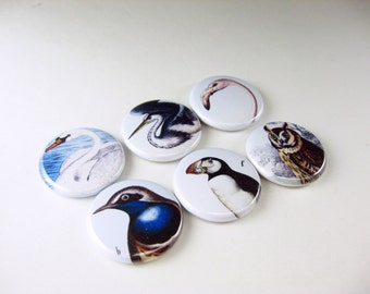Birds, fridge magnet set, bird, refrigerator magnets, bottle cap magnet, pin back button, wine charms, cute fridge magnets 1259