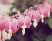 Flower Photography, Bleeding Hearts, Nature Photography, Pink Hearts, Romantic Home, Spring Decor, Valentine, Mothers Day, Wall Art, Print