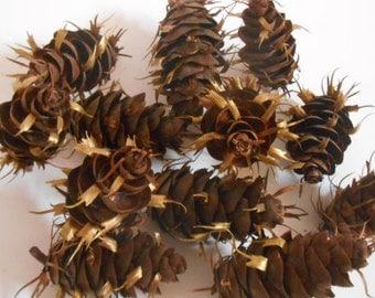 Fir Cone Gold Tipped Bowl Filler 1 Dozen