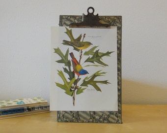 Vintage Arthur Singer Bird Print - Painted Bunting and Southern Red Oak