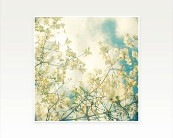 White Flower Art, Nature Photography, Shabby Chic Decor, Blossom, Spring, Floral, Pastel Colours - Clusters in the Sky