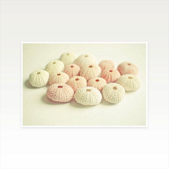 Seashell Photography, Sea Urchin, Minimalist Summer Decor, Pink and Cream Pastel Bathroom Art - Cluster