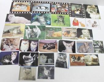 cat pictures,Scrapbooking cat picture pack supplie ,A-30,cat picture pack,cat pictures for crafting,cat pictures,scrapbooking supplies,cats
