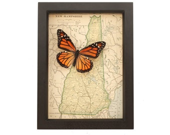 Framed Map of New Hampshire with Real Monarch Butterfly