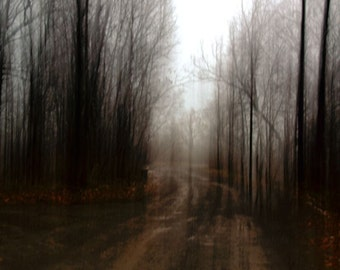 """Abstract landscape photography forest dark trees nature black brown surreal fall - """"Nowhere to go"""" 8 x 10"""