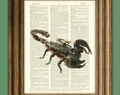 Scorpion Insect over an upcycled vintage dictionary page book art print - Buy 3 get 1 Free
