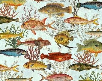 Under the Sea Blue Tropical Fish Seaweed Coral Elizabeth Studio Fabric Yard