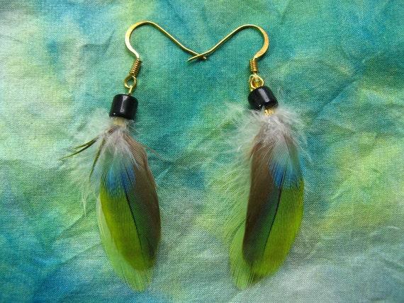 FEATHER EARRINGS Beautiful Exotic Bird Feathers Aqua Blue