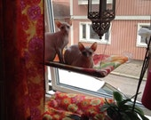Florals - Curious Cats Window Perch