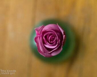 Pink Rose Opening in Green Glass Vase (photos, various sizes)
