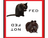 Black Cat Refrigerator Magnet, Cat Gifts, Feed Me, Fridge Magnets, Kitchen Magnets, Cat Artwork, Deborah Julian