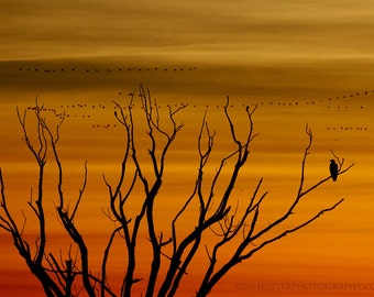 Bald Eagle Photograph, Snow geese in Flight, Sunrise Photograph, Eagle Fine Art Photograph