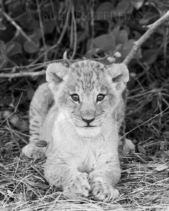 Assez Safari pépinière Decor Photo de bébé LION noir et blanc HJ92