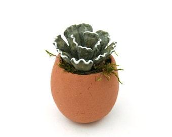 Succulent - Crinkle Leaf