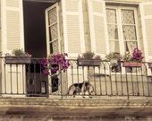 PARIS Photography, FRENCH Beagle on a Balcony, FRANCE travel print, Europe, European, dog, pet, animal
