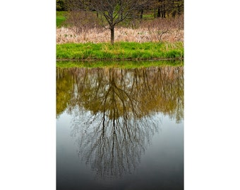 Tree Reflection on the Water by the Shore of Black River in Holland Michigan No.176 - A Fine Art Nature Landscape Photograph