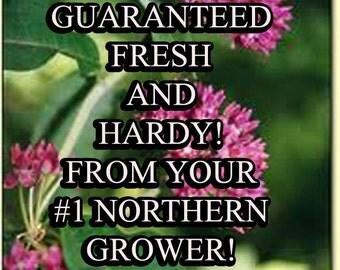 Milkweed-Non-GMO Organic Heirloom Herb Seed