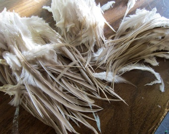Natural taupe saddle 3 to 8 inches craft feathers 50 pack bulk feathers