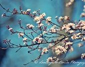 plum blossoms and blue sky art photo, nature photography, flower wall decor, nursery decor, zen style