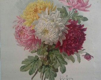Paul de Longpre Chrysanthemum Litho Parks Floral Magazine