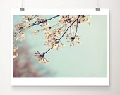 cherry blossom photograph blossom tree photograph pink flower photograph pastel home decor nature photography botanical print
